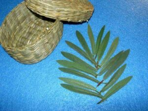 15 Palm Leaves with Basket for Sunday School Lessons